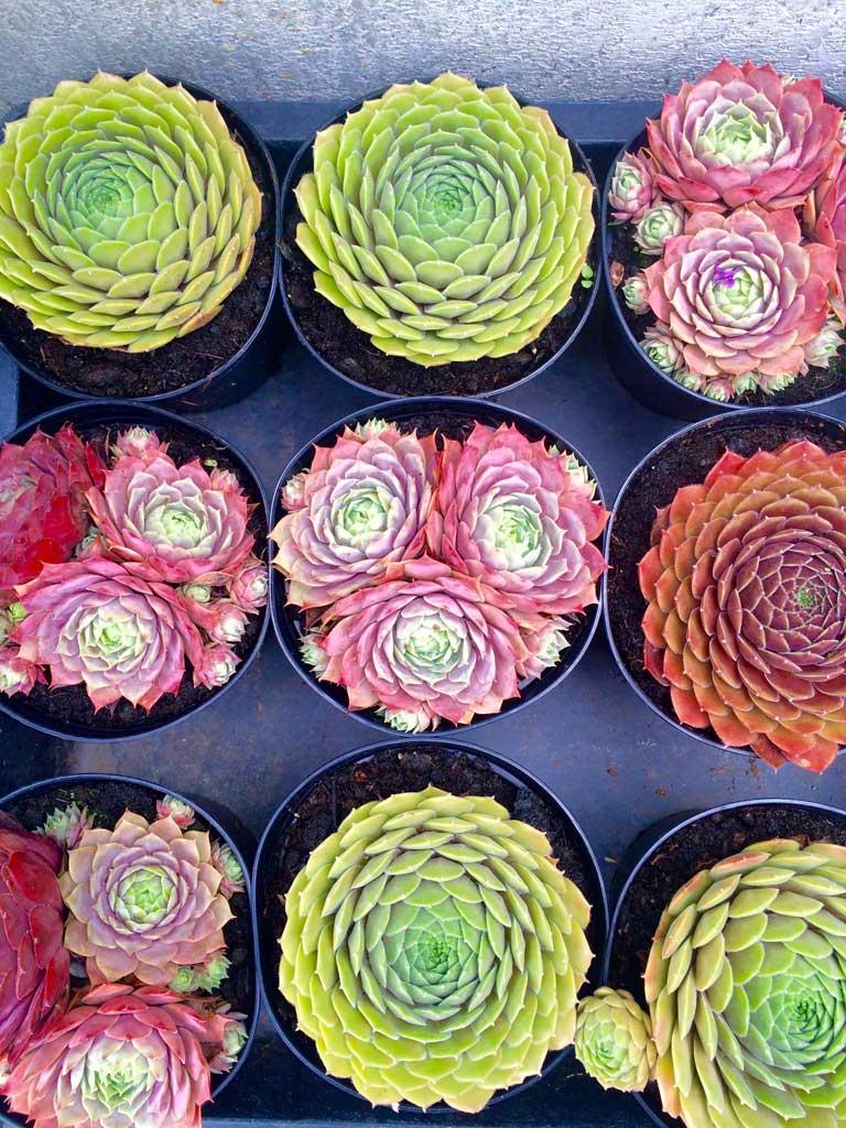 Blumen Czerwinski - Angebote für Ihre Gartengestaltung