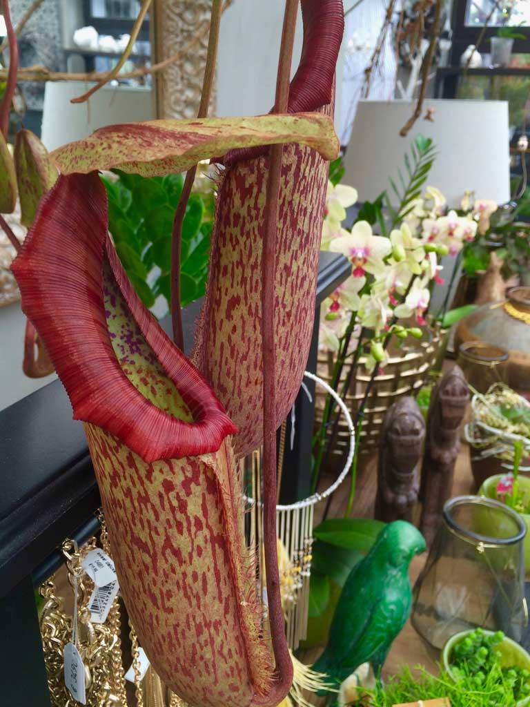 Blumen Czerwinski - Wohnaccessoires mit Stil